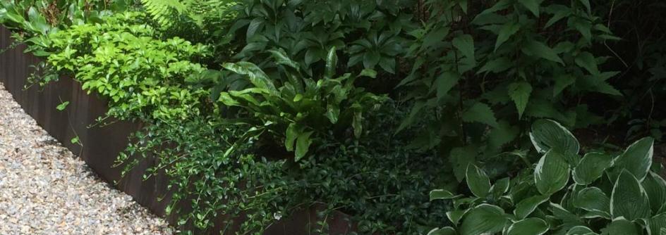 Bepflanzungen von Steiner-Hürlimann Gartenbau